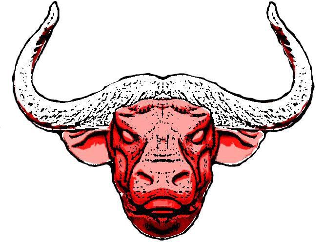 RokDeez Bulls Blog